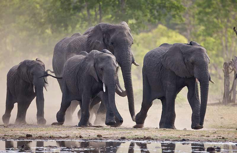 Elephants in Zimbabwe, Hwange National Park, African Wildlife