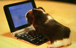 guinea-pig-netbook