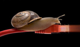 Snail - Internet Speed